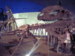 恐竜博物館の恐竜.JPG