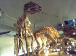 恐竜博物館の恐竜5.JPG