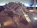 恐竜博物館の恐竜6.JPG