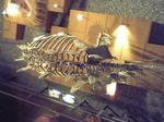 恐竜博物館の恐竜7.JPG