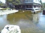 広大な池.JPG