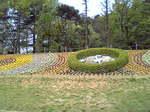 大崎公園花時計.JPG