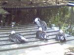 大崎公園鴨たち.JPG