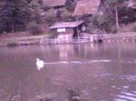 池です.JPG