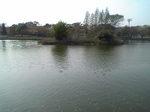 浮間公園の池.JPG