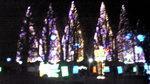光の祭典2011 クリスマストリーズ.jpg