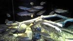 魚たち.jpg